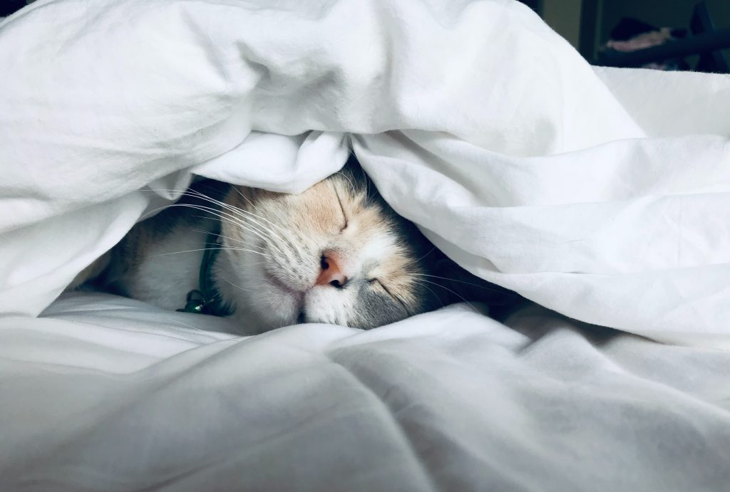 all-season down comforters